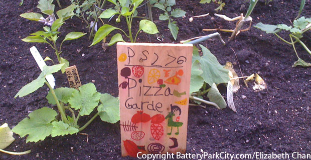 Trees grow in Brooklyn. Pizza Gardens grow in Battery Park City.