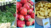 Battery Park City Greenmarket Thursdays at 225 Liberty Street