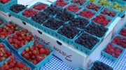 bpc-greenmarket-berries