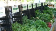bpc-greenmarket-veggies