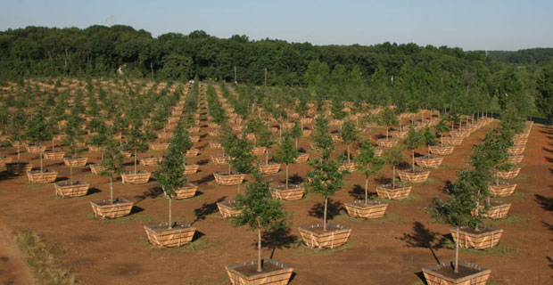 NJ Nursery where the memorial trees were cultivated