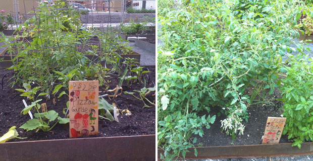 P.S. 276 Community Garden Battery Park City